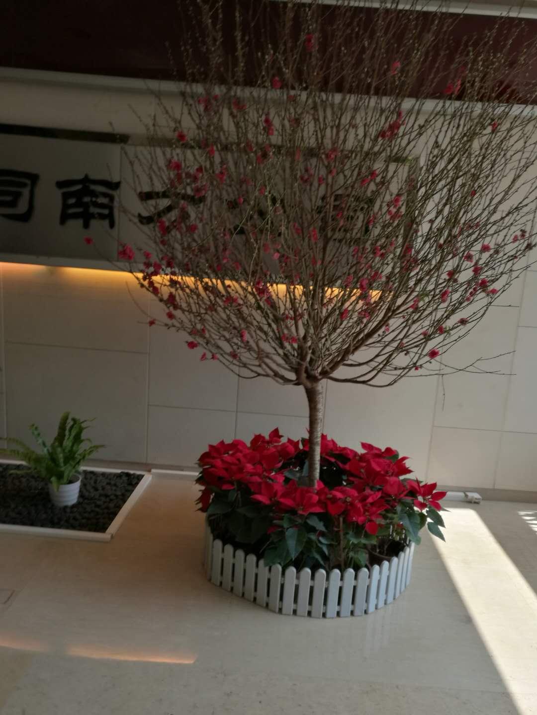 桃花+花圃3