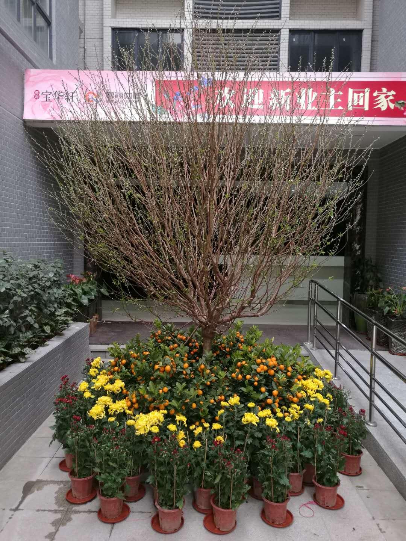 桃花+花圃2