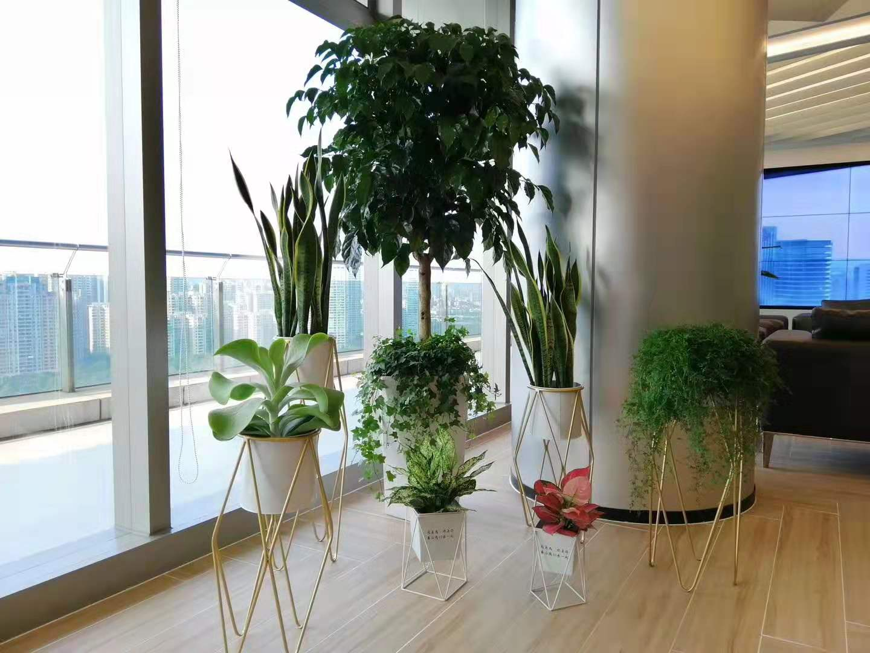 植物組景2