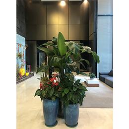 植物組景12