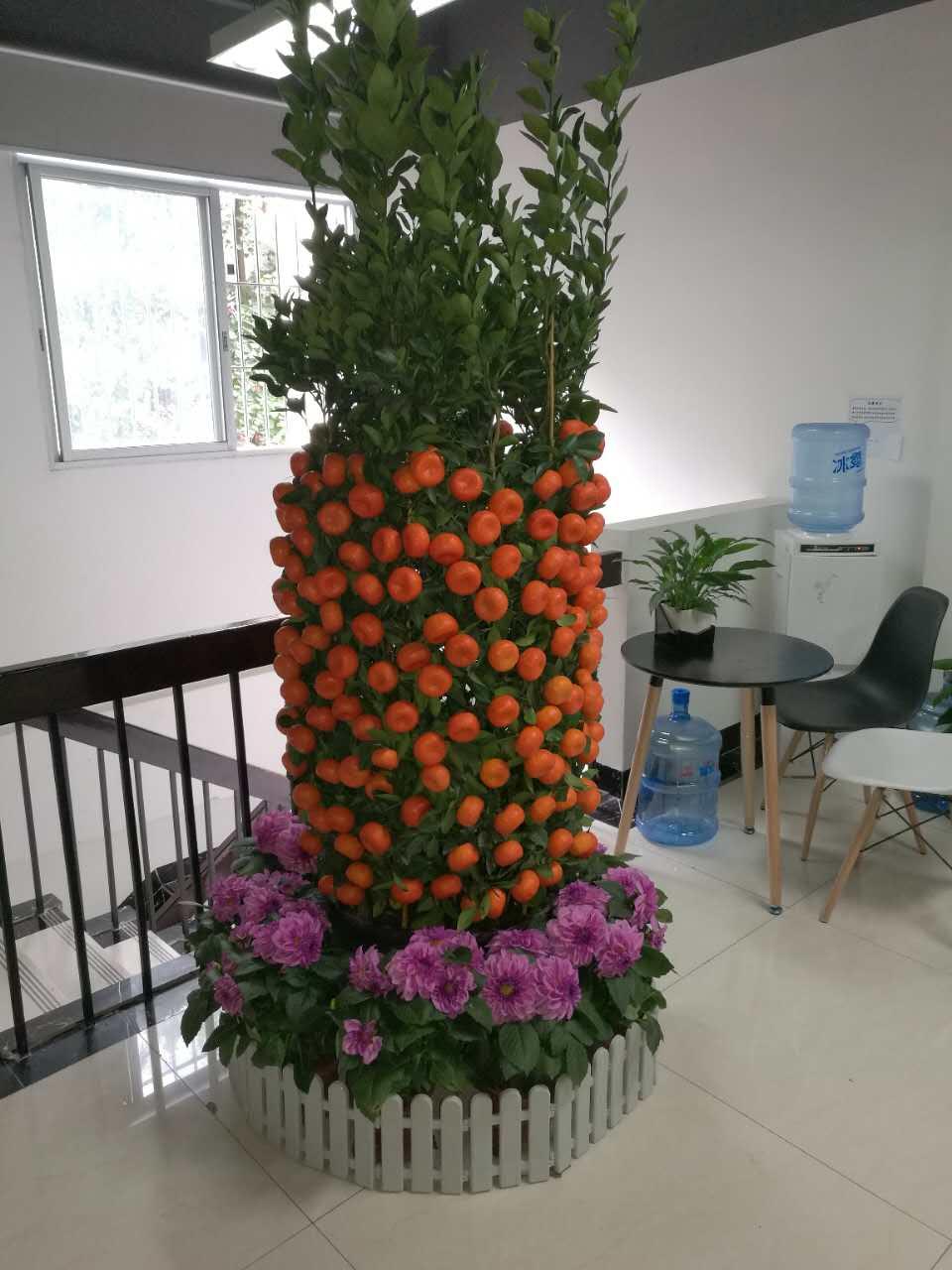 年桔+花圃3