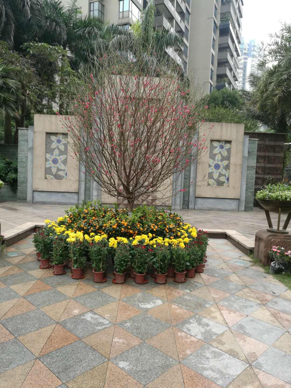 桃花+花圃4