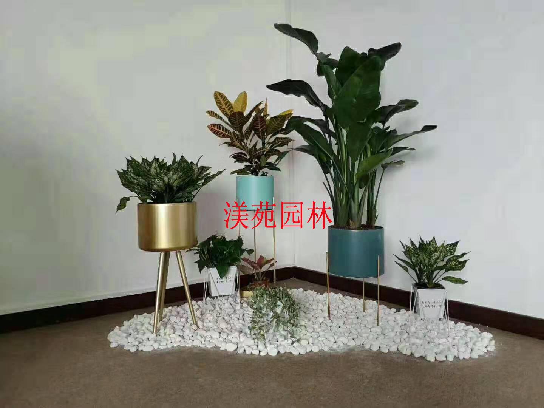 植物組景5
