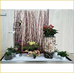 植物組景1